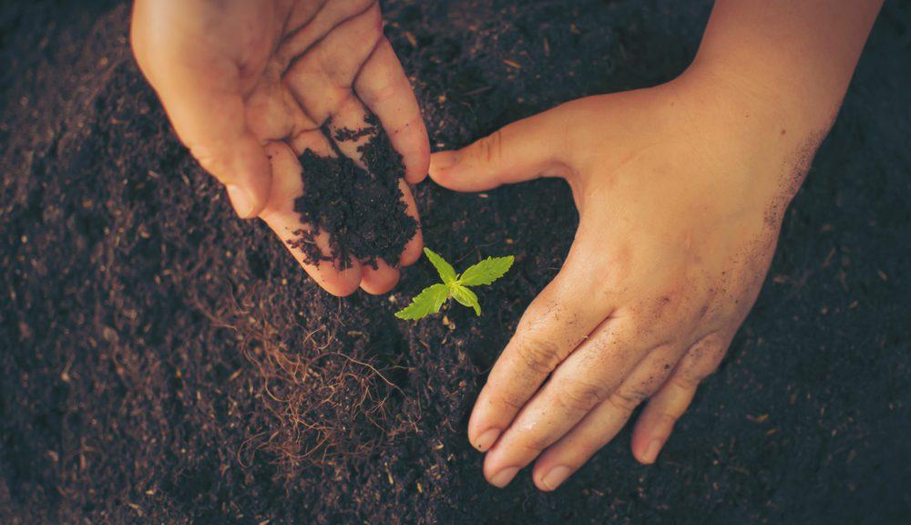 Wietplant voeding